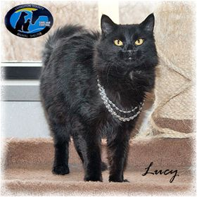 (Photo credit: Livingston County Animal Shelter) Lucy